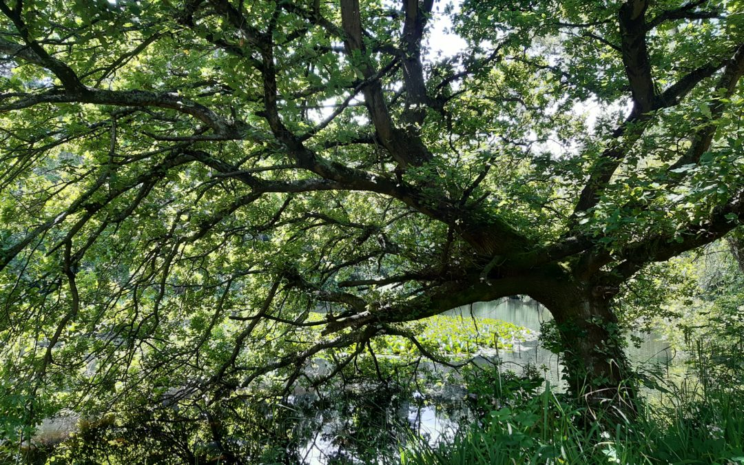 Discovering the trees at Farmleigh